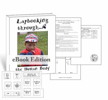Get the templates and lessons to make a lapbook about the human body for homeschool science.