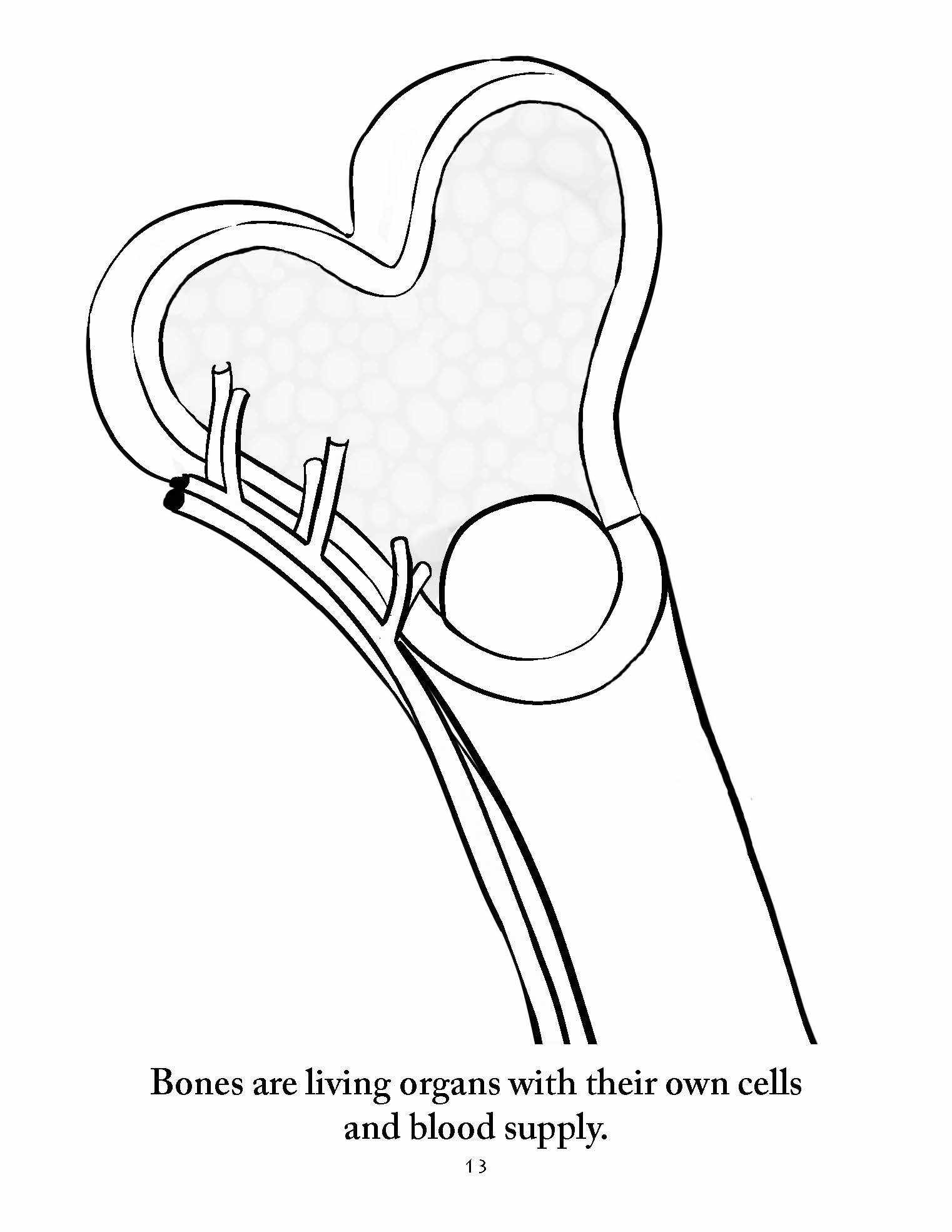 living books anatomy coloring pages
