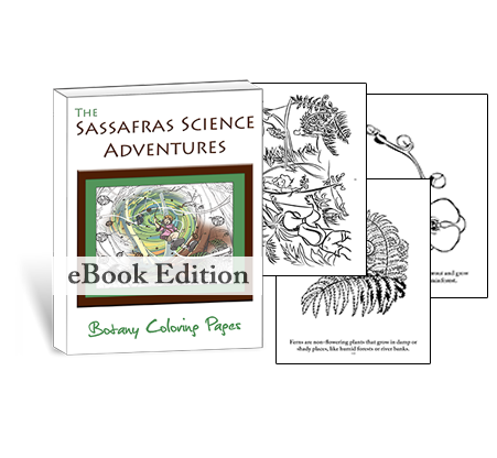 Botany Coloring Pages | Sassafras Science