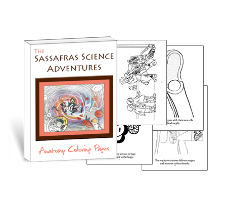 Sassafras Science Anatomy Coloring Pages