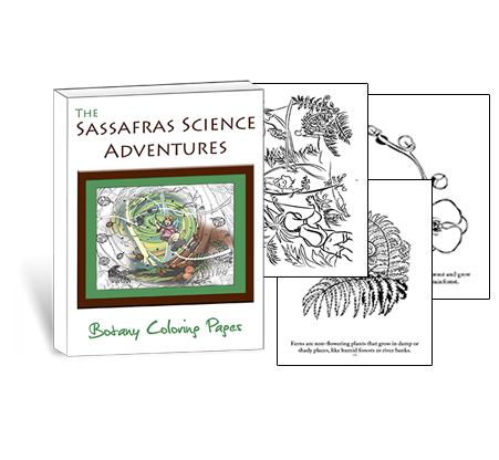 Sassafras Science Botany Coloring Pages