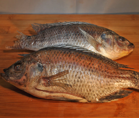 tilapia-model-farm-shop