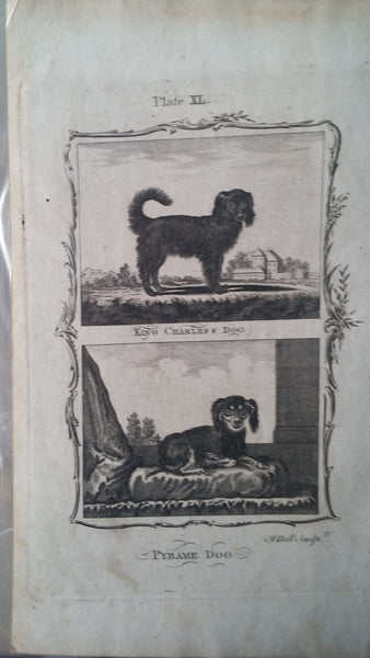 Antique Print of King charles / English Toy Spaniel & Pyrame 1700s
