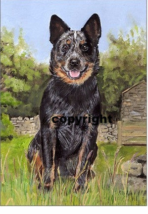 The Australian Cattle dog : Original Painting