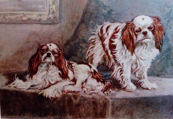 Print of King Charles / English Toy Spaniels