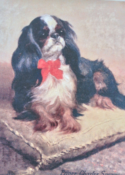 Print of King Charles / English Toy Spaniel