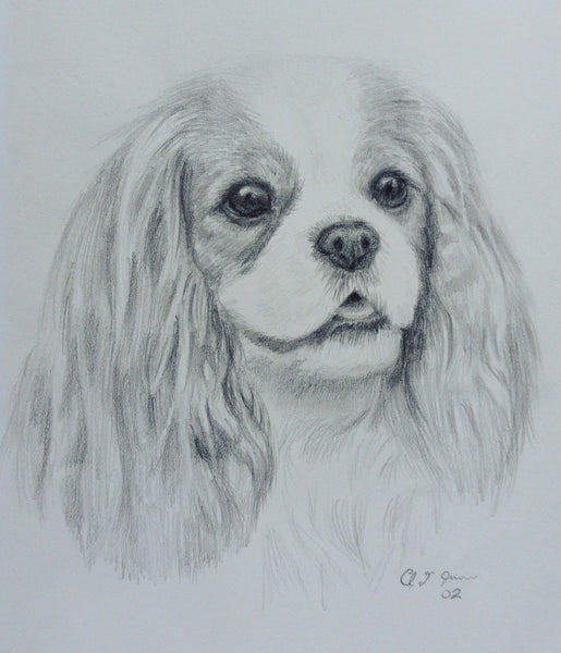 Original Blenheim Cavalier King Charles Spaniel Pencil Sketch Dated 2002