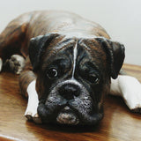 Boxer Dog Wooden Pet Cremation Urn