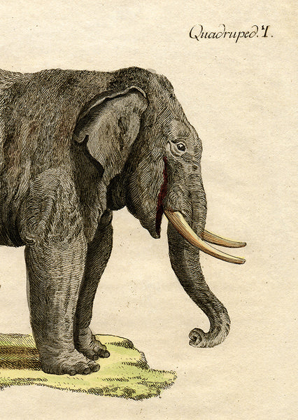 18th Century Elephant (2 Pieces)