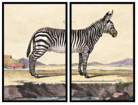18th Century Zebra (2 Pieces)