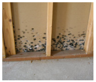 How Mold can effect your hardwood flooring