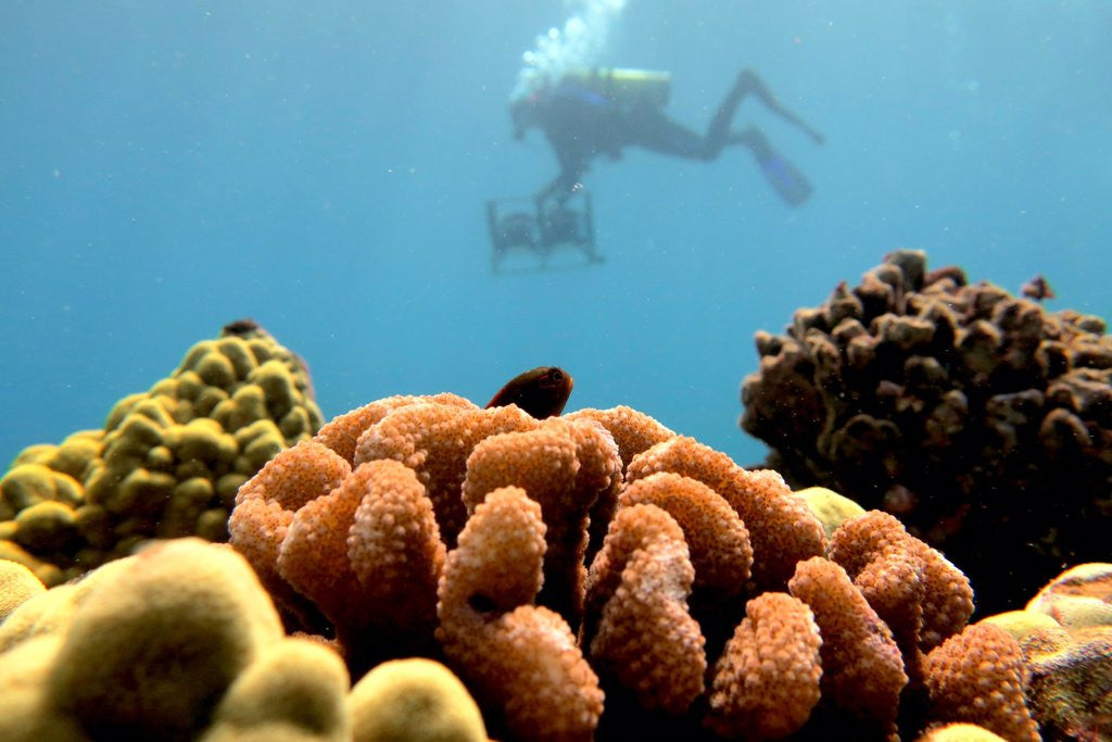 Is your sunscreen reef safe?
