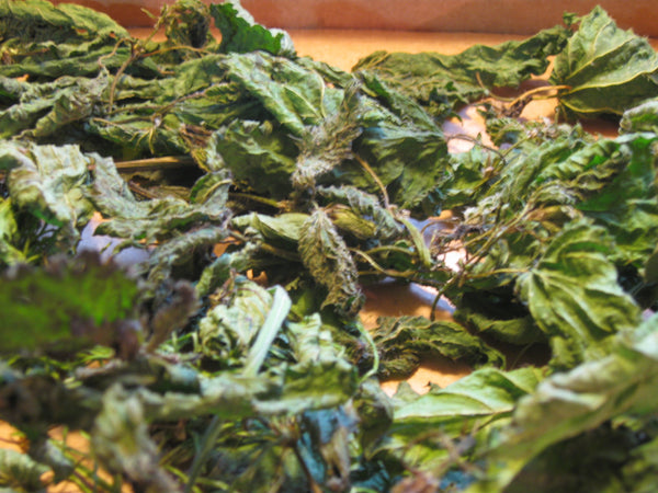 Wild Harvested Nettle Tea