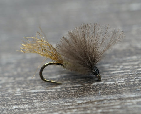 Pupil Caddis