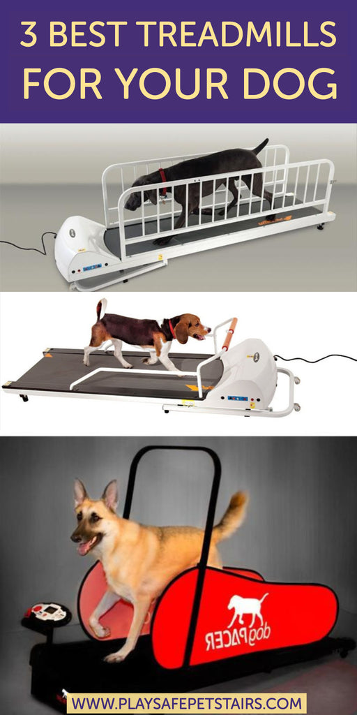 The 3 Best Treadmills For Your Dog