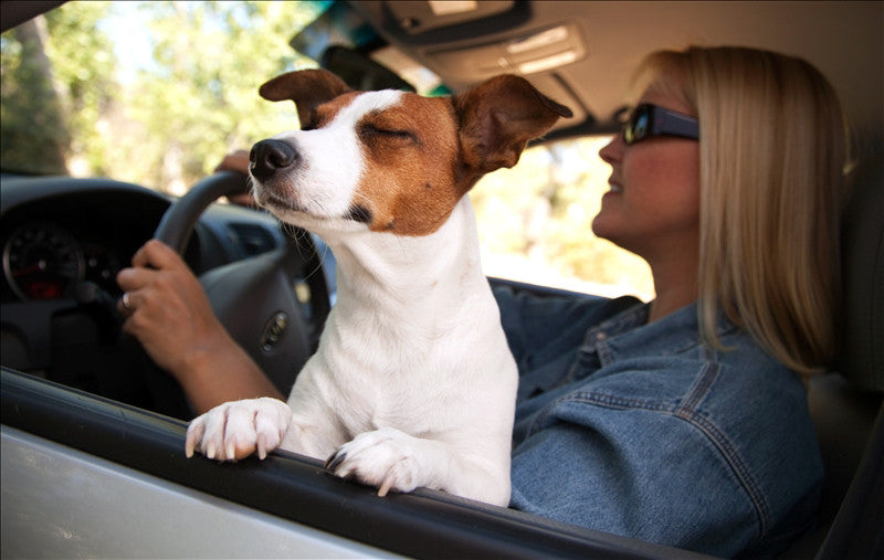 Four Ideas To Plan a Road Trip With Your Dog