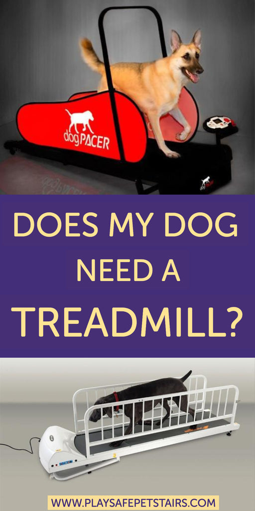 Does My Dog Need a Treadmill?