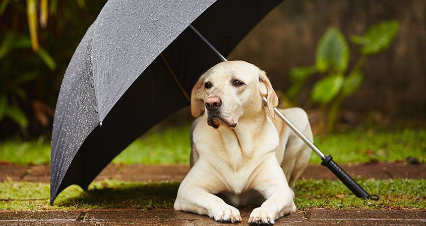 10 Tips to Prepare Your Pet for a Hurricane