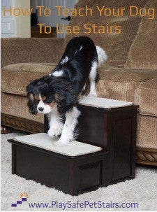 How To Teach Your Dog to Use Stairs
