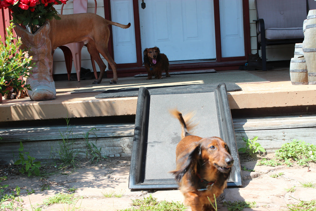 How To Find the Best Dog Ramp