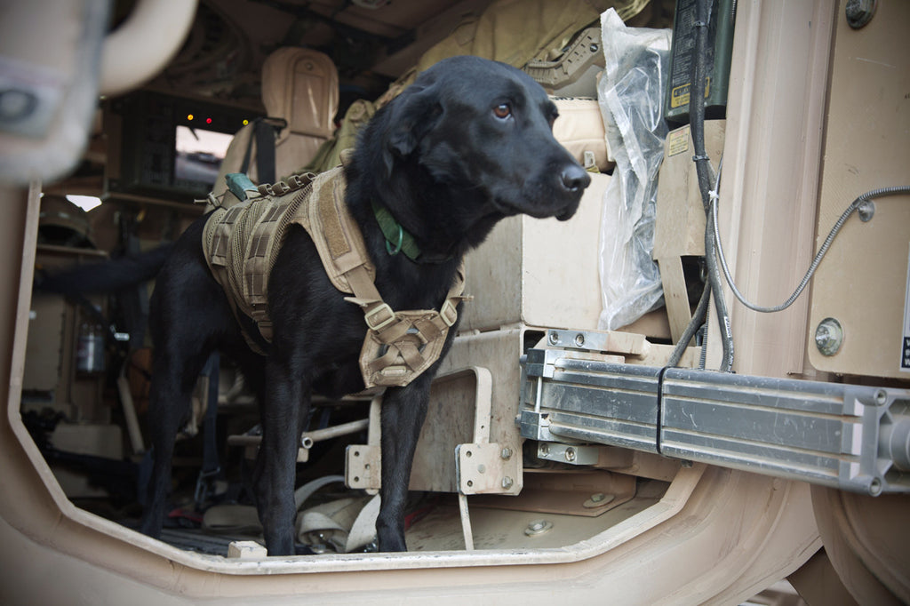 Bringing Home Our Military Working Dogs