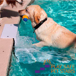 Dog Pool Steps Could Save Your Dog From Drowning