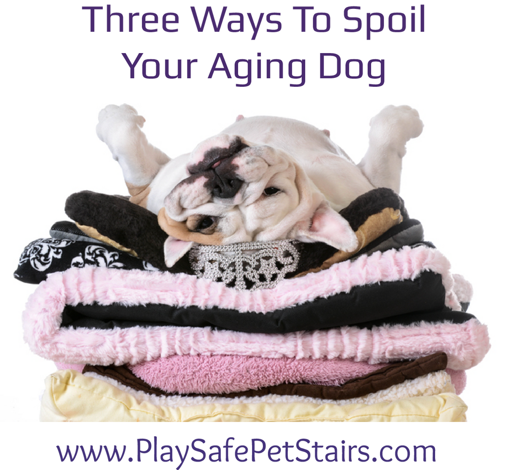 Three Ways to Spoil Your Aging Dog