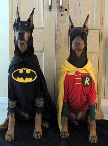 Dog Halloween Costume Bat Man