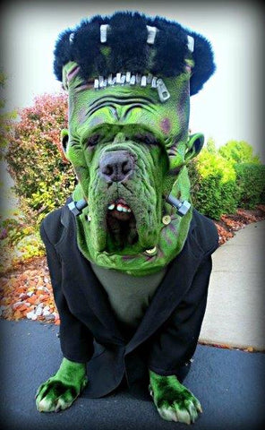 Dog Halloween Costume Frankenstein