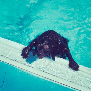 Dog Swim Drown