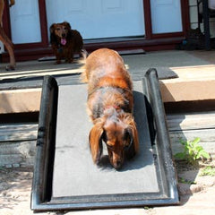 How To Find The Best Dog Ramp Play Safe Pet Stairs