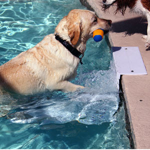 Paws Aboard Pool Pup Steps Play Safe Pet Stairs