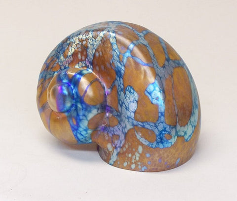 Amber Cypriot Shell