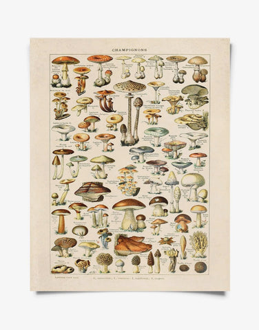 Vintage Botanical French Mushroom Diagram 8x10