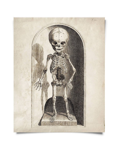 Vintage Anatomy Small Skeleton Print 8x10