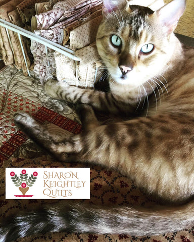 Sorting fabric with Benny the Bengal | Sharon Keightley Quilts