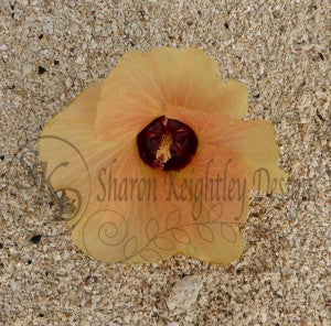 Hibiscus flower on the beach