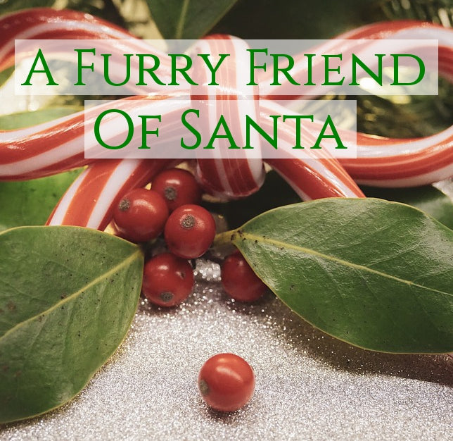 A Furry Friend of Santa