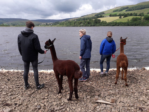 A Woolly Wander Experience - Thursday 18 June 2020