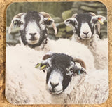 Image shows front of coaster with 3 swaledale sheep on