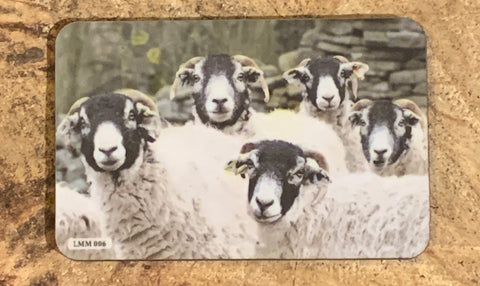 Image shows fridge magnet with flock of Swaledale sheep on