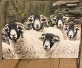 Image shows front of placemat with flock of swaledale sheep on.
