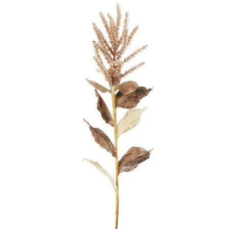 Wheat with Leaves Brown