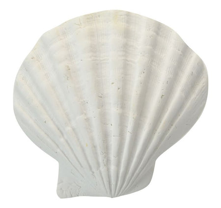 White Resin Sea Shell