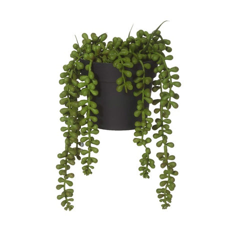 String of Pearls Garden Pot