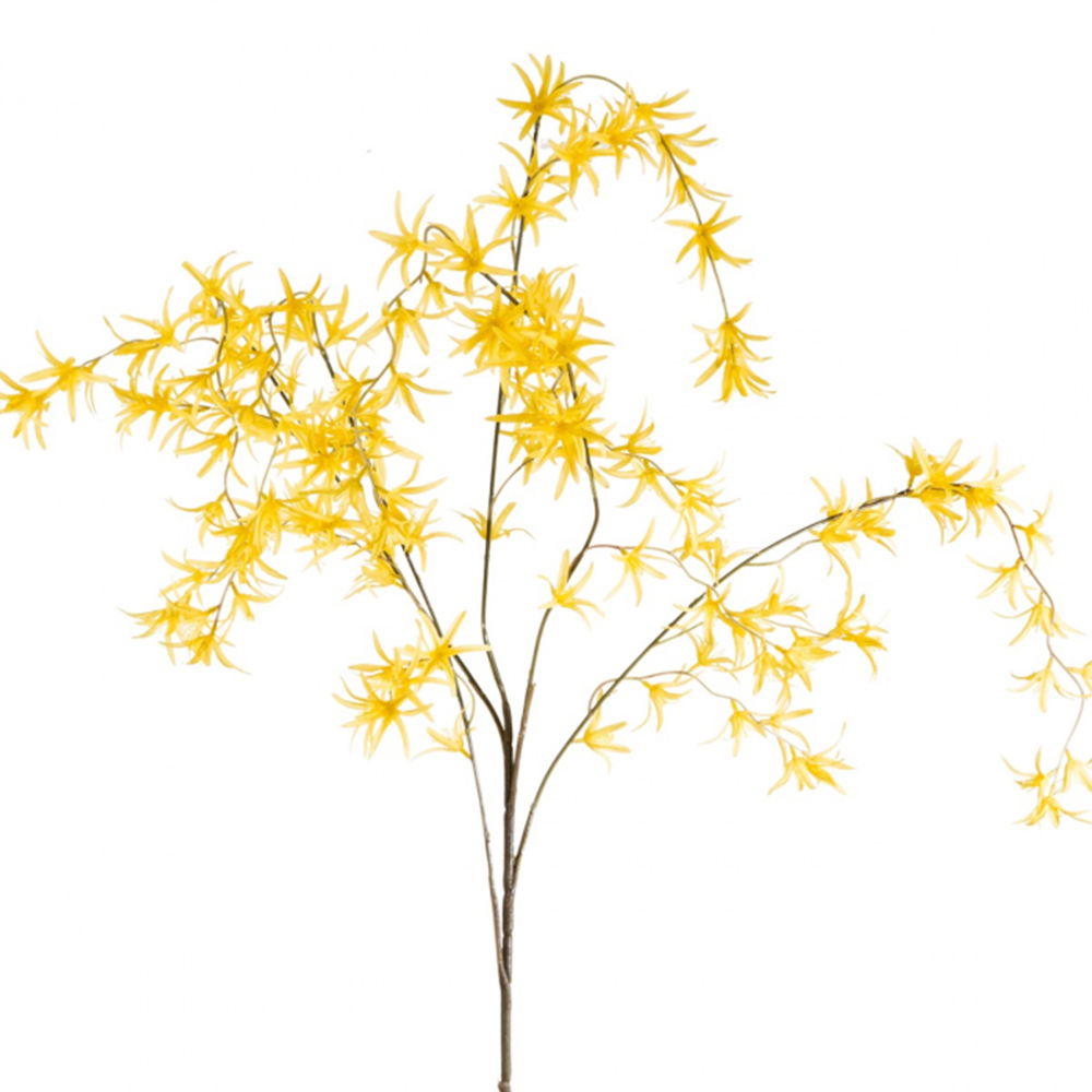 Spider Orchid Spray x5 - Yellow - 120cm