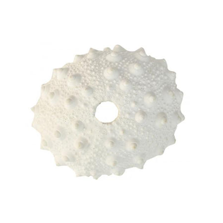 White Resin Spiky Urchin Coral