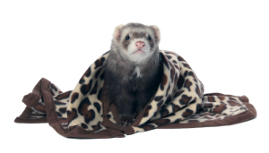 Designer Fleece Blanket