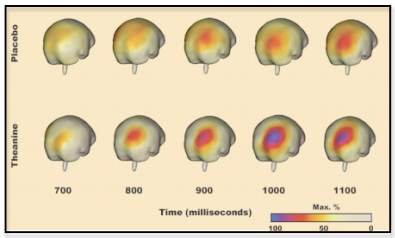 L-theanine brain imaging showing increased alpha waves improving cognitive performance.