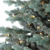 Colorado Blue Spruce Tree, Full